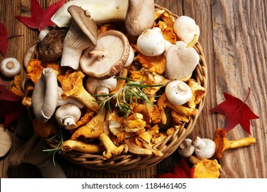 variety of raw mushrooms on wooden table. chanterelle, oyster and other fresh mushrooms