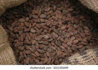 Variety roasted cacao