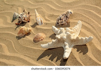Variety of sea stars and seashells of different shapes and colors on the sandy coast of the sea in summer.