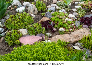 Alpine Garden Images, Stock Photos & Vectors | Shutterstock