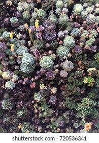 Variety of succulent plants in soil