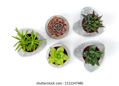 Variety of succulents in concrete planters, isolated on white background. Contemporary decor.
