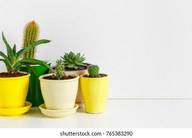 Variety of Succulents  in different  pots