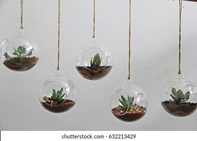 Variety of succulents in round, glass terrariums