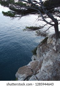 Variety of textures: sharp gray rocks, soft surface of the blue sea and branched dark green pine branches