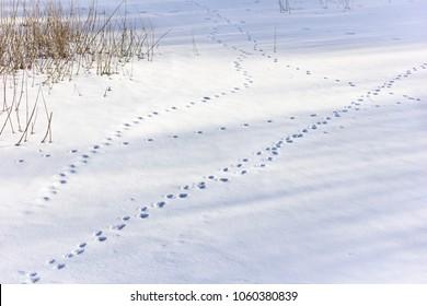 Various animal footprints in the snow