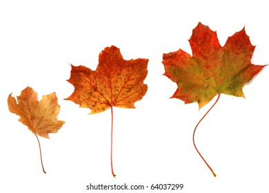 various autumn leaves of gold, red, orange, green, and brown isolated on a white background, with room for your text