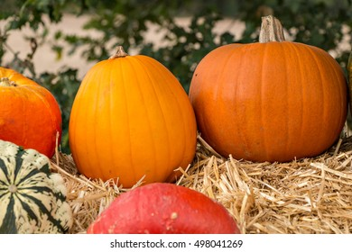 Various autumnly decorated pumpkins for sale