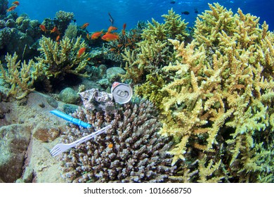 Various bits of litter including a drinks can, a take away container and a single use plastic fork lie on top of the coral reef underwater