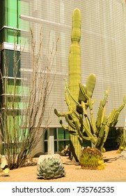 Various cacti including saguaro and barrel cactus in front of a building facade in sunshine