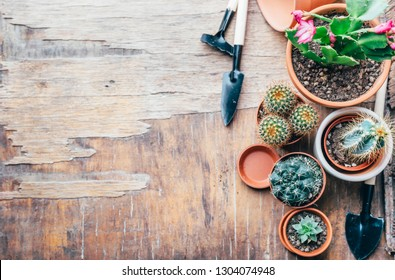 Various cactus and succulent plant in clay pot and gardening tool on vintage wooden background from above. Houseplant growing hobby and spring flower care at home flat lay. Flower shop design banner.