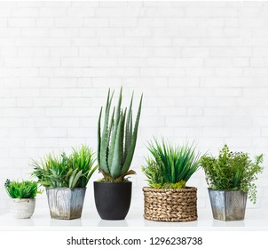 Various cactus and succulent plants in pots against white brick wall, crop, free space