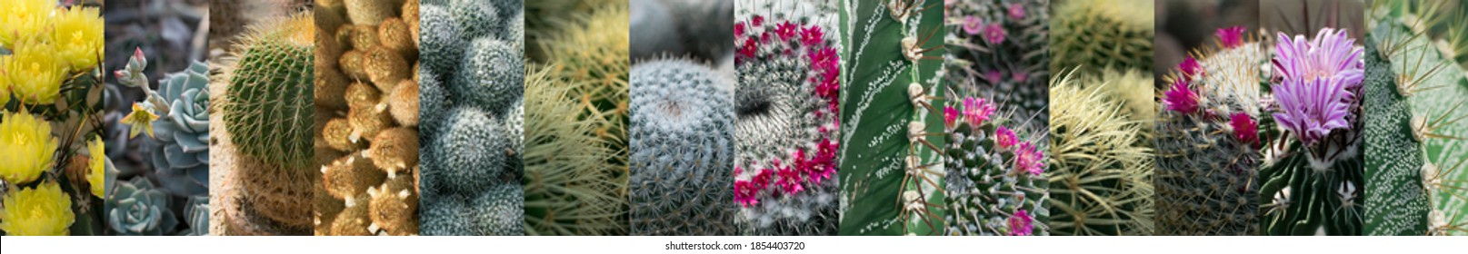 Various Cactuses Collage. Different Cactus Collection, Spiky Cactaceae Mix, Succulent Assortment