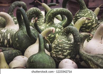 Various Calabash gourds (bottle gourd)