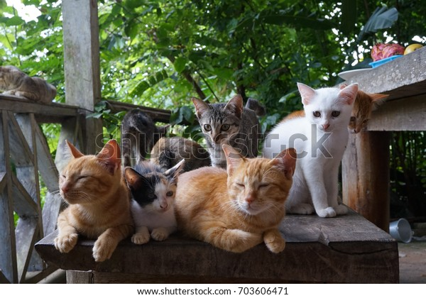 various cats like family .