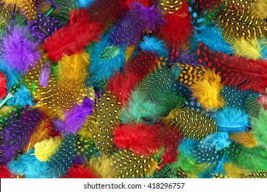 various  color feather background