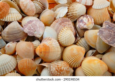 Various colorful mixed sea shells