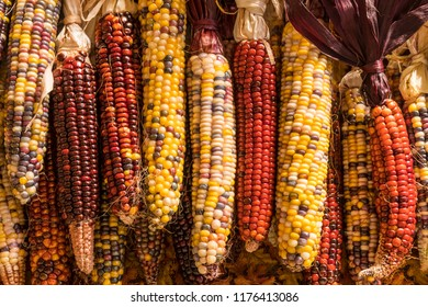 Various Colors of Dried Indian Corn in a Row