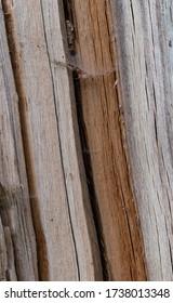Various colors of wood of split tree