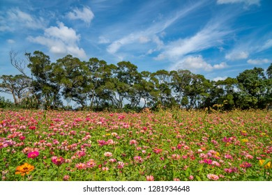 Various daisy flower blossom under beautiful blue sky and clouds