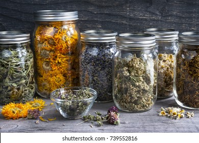 Various dried medicinal herbs and herbal teas in several glass jars on gray wood background, close up