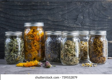 Various dried medicinal herbs and herbal teas in several glass jars on gray wood background with copy space