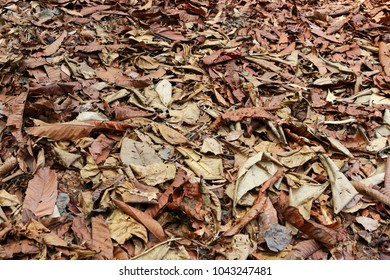 Various fallen leaves on the forest floor