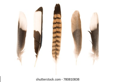 Various feathers on white background