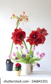 various flowering houseplants