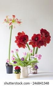 Various flowering houseplants on table