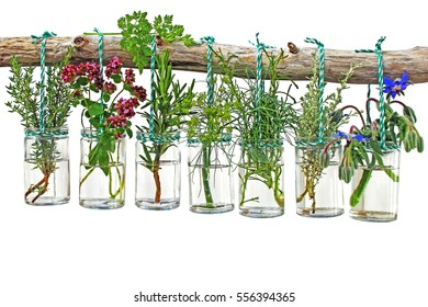 Various fresh herbs in glasses hanging on a branch against a white background