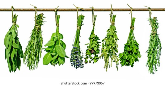 various fresh herbs hanging on a rod