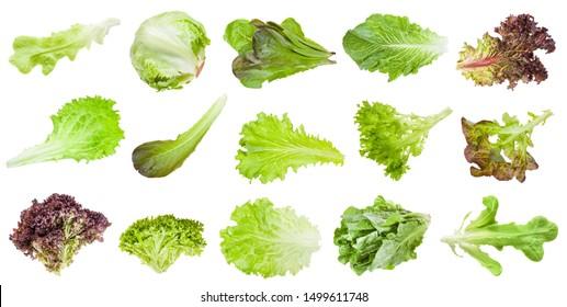 various fresh leaves of lettuce vegetables isolated on white background