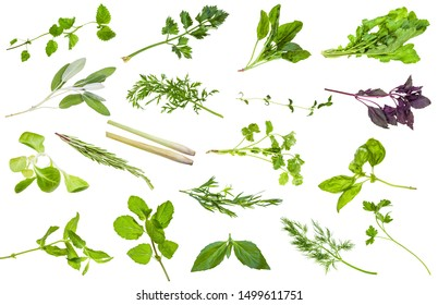 various fresh twigs of edible herbs isolated on white background