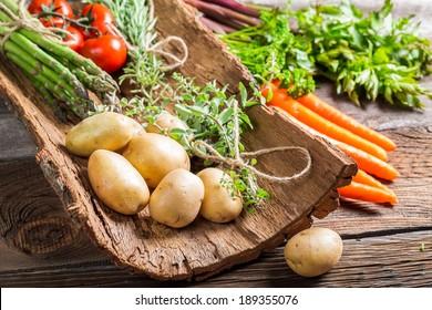 Various fresh vegetables on bark