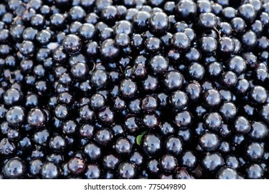 Various fruits of jabuticaba in popular commerce of the city