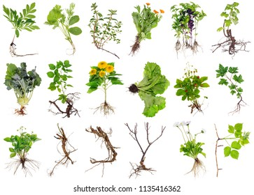 Various garden plants and flowers with roots. Isolated on white studio set