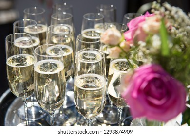 Various glasses of champagne on a tray with an unsharp pink rose in foreground