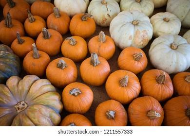 Various harvest pumpkins and gourds