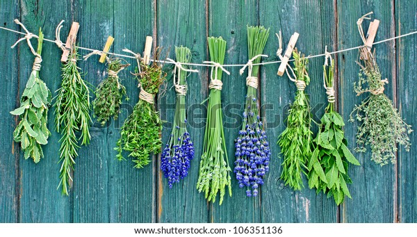 various herbs hanging  on a leash