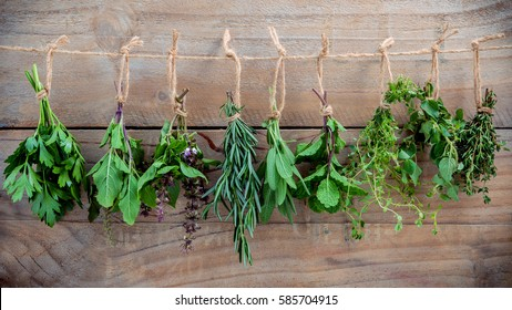 Various herbs hanging on shabby wooden background.  Parsley ,oregano, mint, sage, rosemary, sweet basil ,holy basil and thyme for seasoning concept .