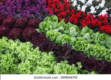 Gemüse- und Blumenfarm.