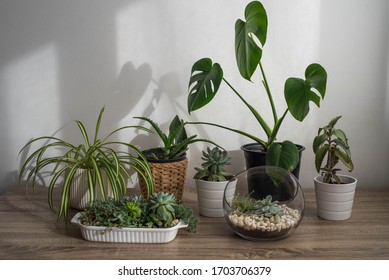 Various indoor plants on the wooden table by the white wall