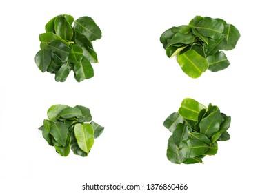 Various Kaffir Lime Leaf or Daun Limau Purut isolated on white background