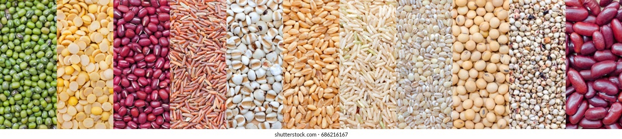 Various kinds of natural grains and cereals, consisted of green bean, soybean, red bean, rice seed, wheat, and millet, for food raw material and agricultural product concept