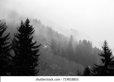 Various layers of trees and plants on a mountain side in the midst of fog