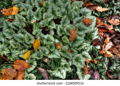 Various leaves on the ground in the autumn