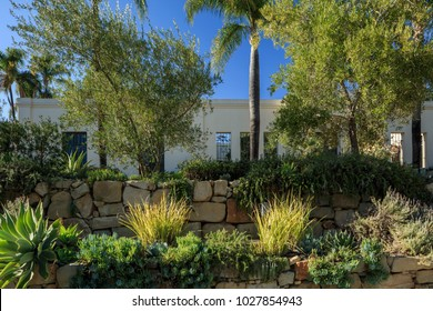 Various native and common garden plants in the yard of a southern california home