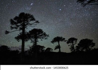 Various natural landscapes at night and day in Conguillio National Park, Chile