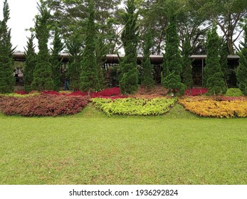 The various ornamental plants with beautiful different colors if leaves